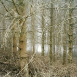 Richard Petit - In the Woods 001