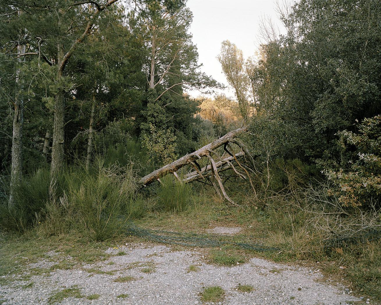 © Richard Petit - Border Line - arbre couché 2019_M002_01
