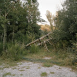 © Richard Petit - Border Line -  lying tree 2019_M002_01
